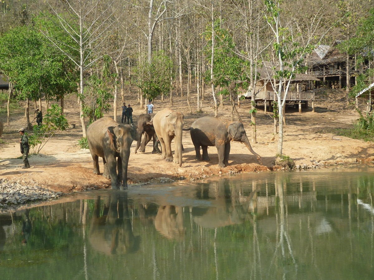 Elephant Conservation Centre, Laos