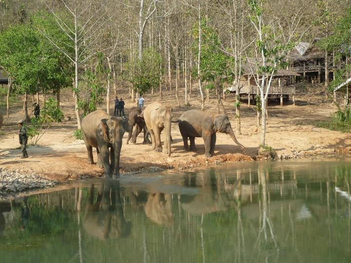Elephant Conservation Centre,Laos
