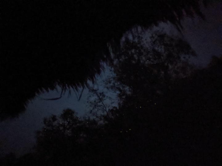 4 Rivers fireflies