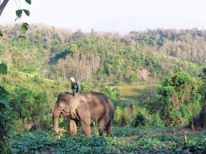Elephant Conservation Centre Laos